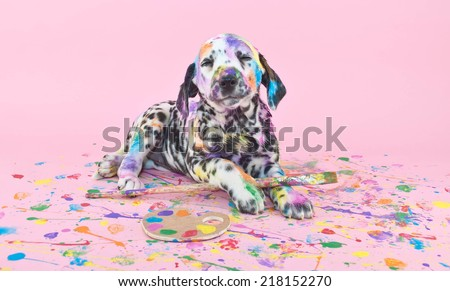Silly Dalmatian  puppy that is smiling about her art work, on a pink background. - stock photo