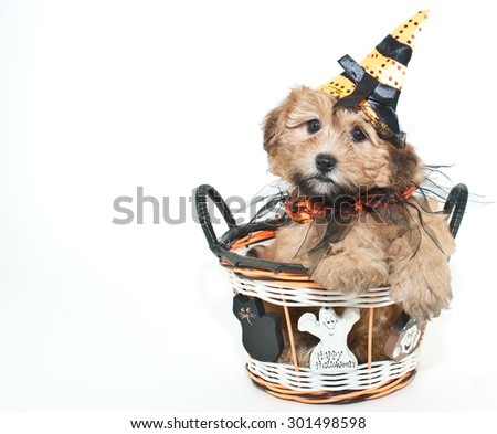 Silly puppy wearing a witch hat sitting in a Halloween basket, on a white background with copy space.