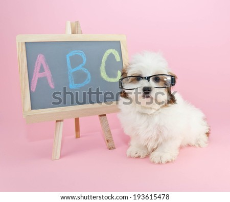 Silly puppy wearing glasses sitting beside a chalkboard with A,B,C, wrote on it. - stock photo