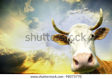 Silly smiling cow on sky background - stock photo