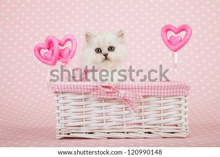 Silver Chinchilla Persian kitten sitting inside white wicker basket with pink hearts on pink background - stock photo