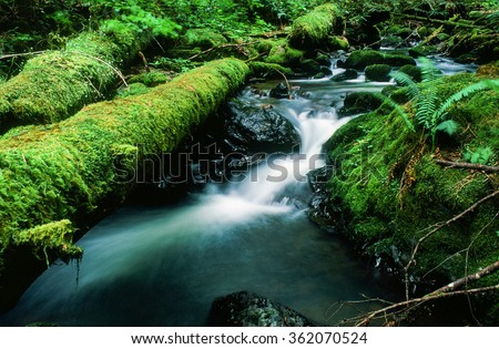 Silver Falls state park in Oregon has miles of hiking to see vast waterfalls amidst lush plantlife in a natural setting. - stock photo