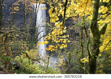Silver Falls State Park Oregon at Fall Color - stock photo
