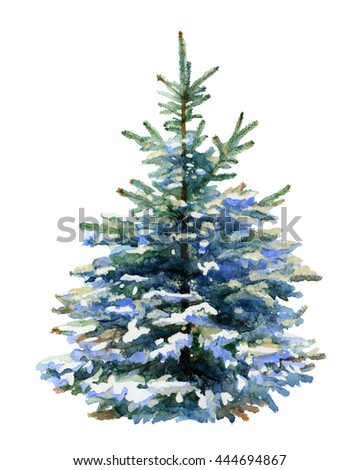 silver fir tree isolated on white