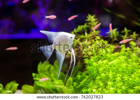 Dark Silver Fish Stock Images, Royalty-Free Images & Vectors ...