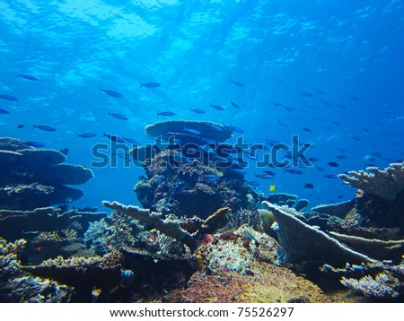 silver fish on the coral reef - stock photo