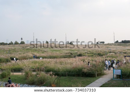 "silver grass Beautiful park ""sky park""