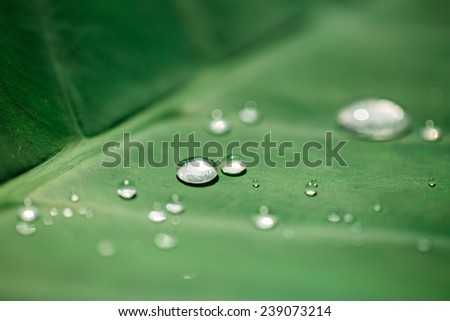 Silver raindrops on green leaf - stock photo