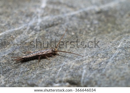 Silverfish Stock Images Royalty Free Images Amp Vectors