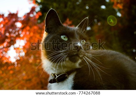simba stock images royaltyfree images  vectors
