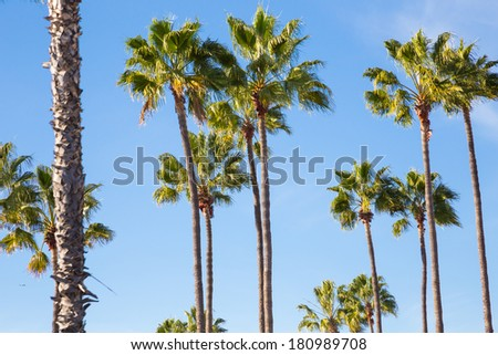 Simple color image of palm trees against a blue sky in tropical San Diego California. - stock photo