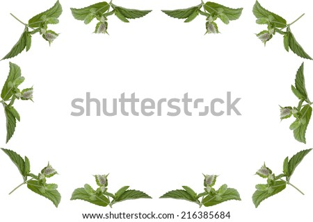 simple frame of mint leaves  isolated on white background