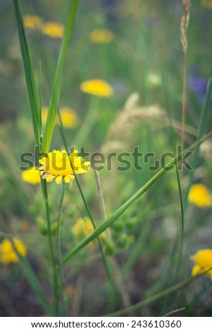 Simple natural background with a detail of a yellow flower - stock photo