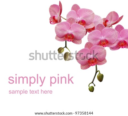 Simply pink orchid - stock photo