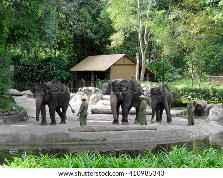 SINGAPORE ASIA - NOVEMBER 14: Elephants at Work and Play Show at Singapore Zoo November 14, 2014 in Singapore, Asia