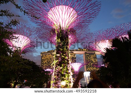 singapore august 25 2016 pink supertree grove at gardens by the bay