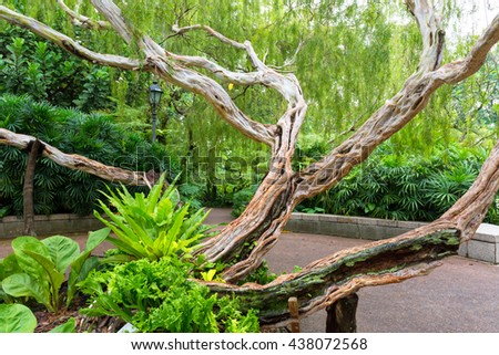 SINGAPORE - SEPTEMBER 15, 2015: Old tree from Singapore National Orchid Garden.