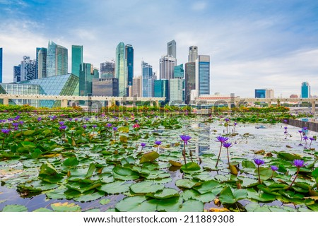 Singapore skyline of business district and Marina Bay in day, foreground with lotus pond - stock photo