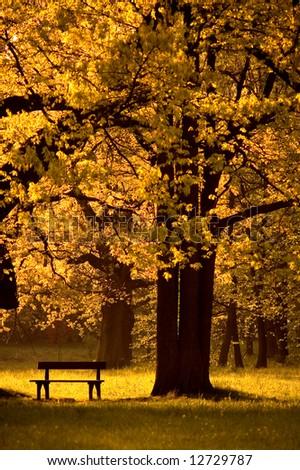 Single bench in park, under beautiful tree, autumn - stock photo