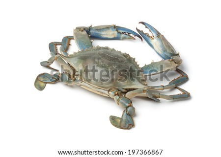 Single blue crab on white background