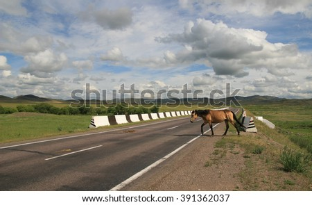 Single brown horse passes the highway in the summer