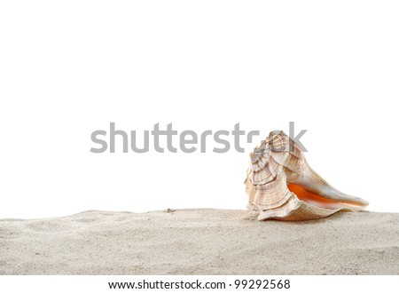 Single Conch sea shell on sand isolated on white - stock photo