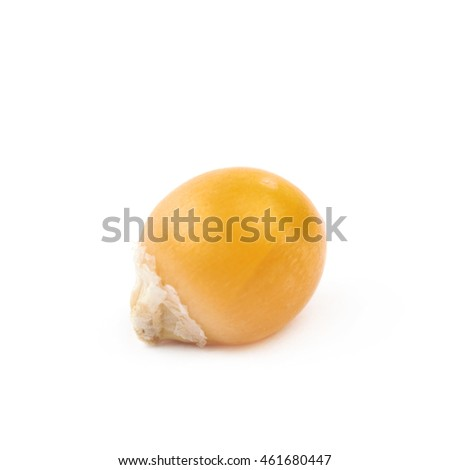 Single corn kernel isolated over the white background