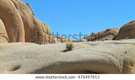 joshua tree national park black single women It thrives in the open grasslands of queen valley and lost horse valley in joshua tree national park a dense joshua tree forest also exists in the mojave national.