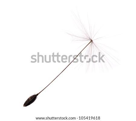 single dandelion seed isolated on white background - stock photo