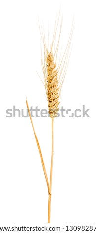 single ear of wheat isolated on white background - stock photo