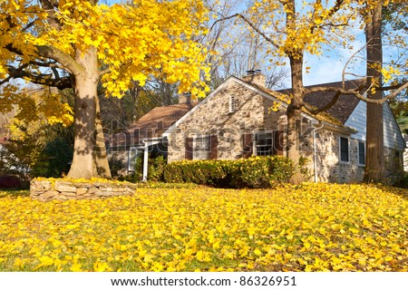 Single family home in suburban Philadelphia. Yellow Norway Maple leaves and tree - stock photo