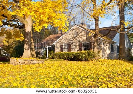 Single family home in suburban Philadelphia. Yellow Norway Maple leaves and tree - stock photo