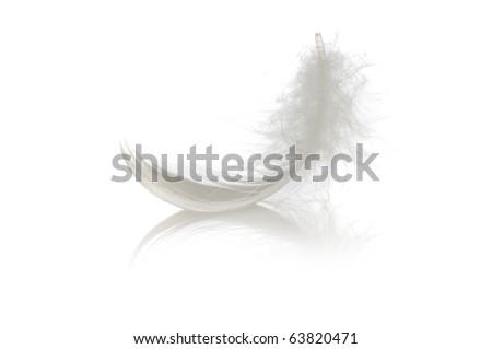 single feather on white - stock photo
