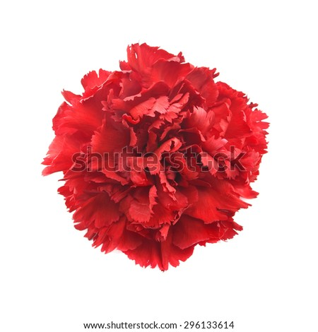 Single flower, red carnation isolated on white background. Top view - stock photo