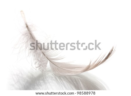 Single fluffy feather isolated on white - stock photo
