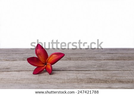 Single Frangipani or Plumeria flower on wooden background.  - stock photo