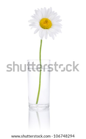 Single Fresh chamomile in glass water Isolated on white background - stock photo
