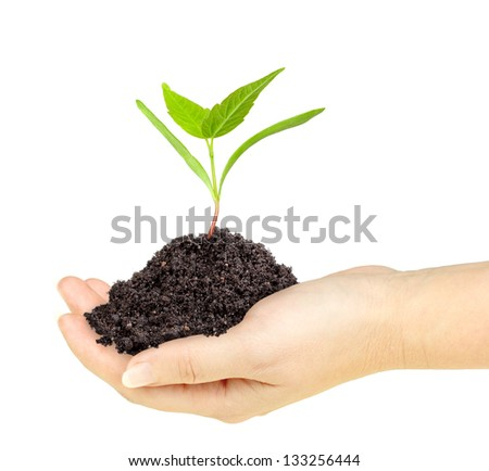 Single fresh green plant with dirt in a hand. Isolated on white background. Close-up. Studio photography. - stock photo