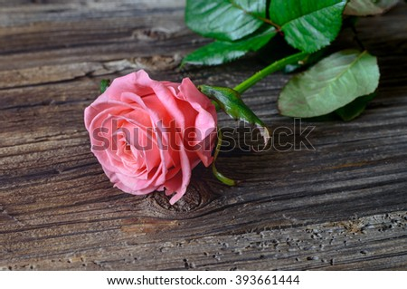 Single fresh pink rose symbolic of love and romance on a rustic wooden table for a sweetheart on Valentines Day, Mothers Day or anniversary, with copy space - stock photo