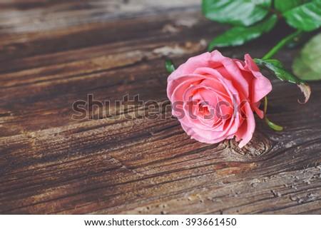 Single Fresh Pink Rose Symbolic Love Stock Photo Royalty Free