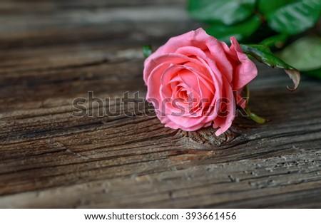 Single Fresh Pink Rose Symbolic Love Stock Photo Edit Now