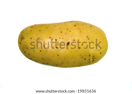 Single freshly harvested potato without roots and leaves. - stock photo