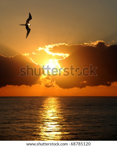 Single frigate bird over the ocean at sunrise