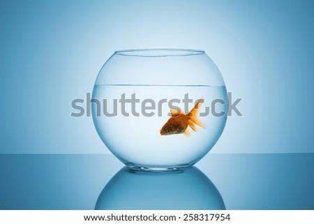 single goldfish in a fishbowl - stock photo
