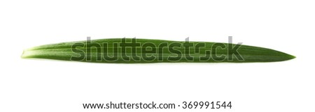 Single green chrysanthemus leaf isolated