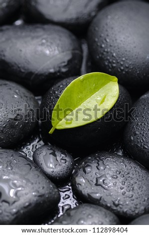 single green leaf on the pebble beach - stock photo