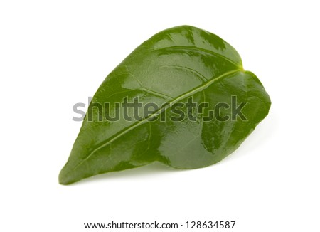 Single green leaf  on white background with shadows