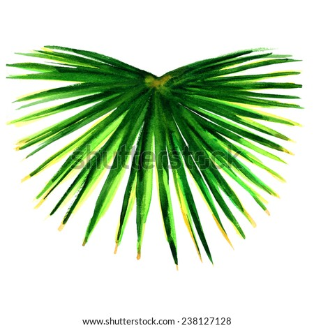 single green palm leaf isolated - stock photo