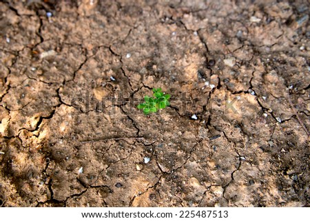 Single green plant growing in dry, cracked mud