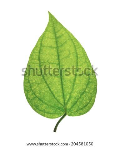 Single isolated leaf on a white background - stock photo
